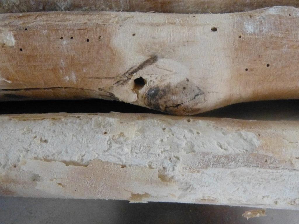 Holzwurm geschädigtes Holz - Ausfluglöcher und Frassgänge